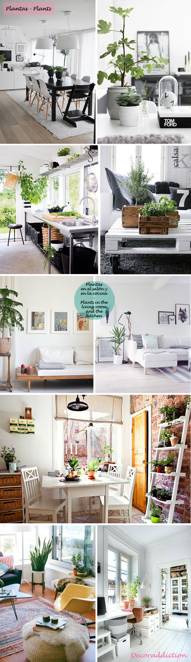 Deja que el verde entre en tu casa - Let the green into your home_plantas